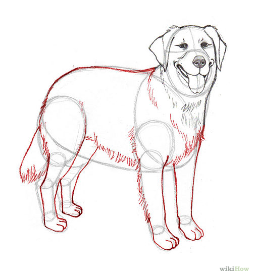 how to draw a dog tail